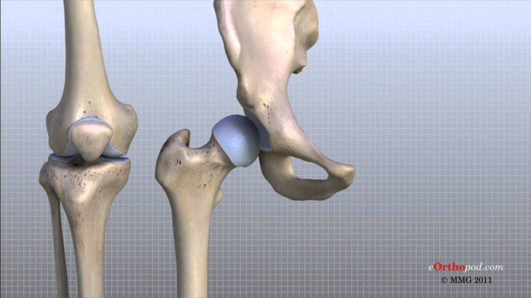 Medicine - Knee Anatomy Animated Tutorial