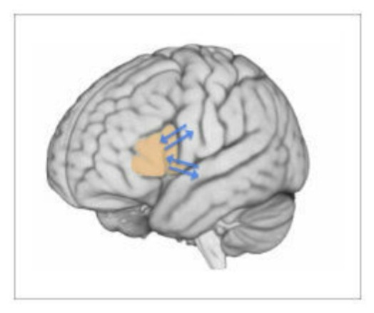 Broca's Area Is the Brain's Scriptwriter, Shaping Speech, Study Finds - 02/17/2015